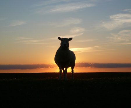 FIVE MIN. POWER MESSAGE #30: The Parable of the Lost Sheep, Renamed, 3-5-17